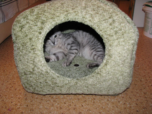 фотография домика для кошки