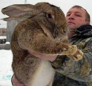 заяц в Германии укусил охотника