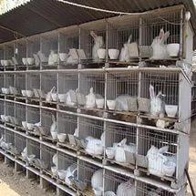 клетки кроликов