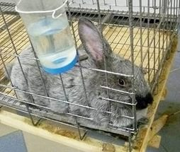 подвесная поилка для кролика