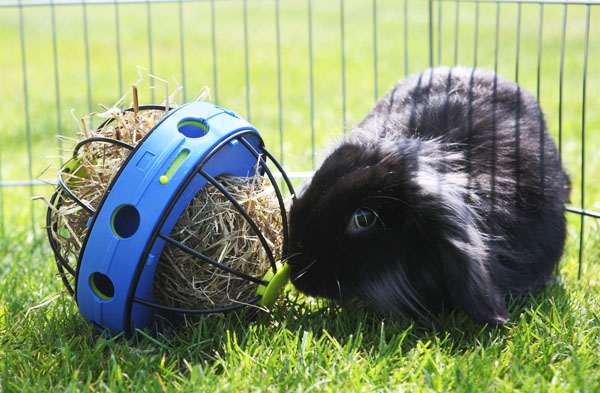 шарик — кормушка для кролика