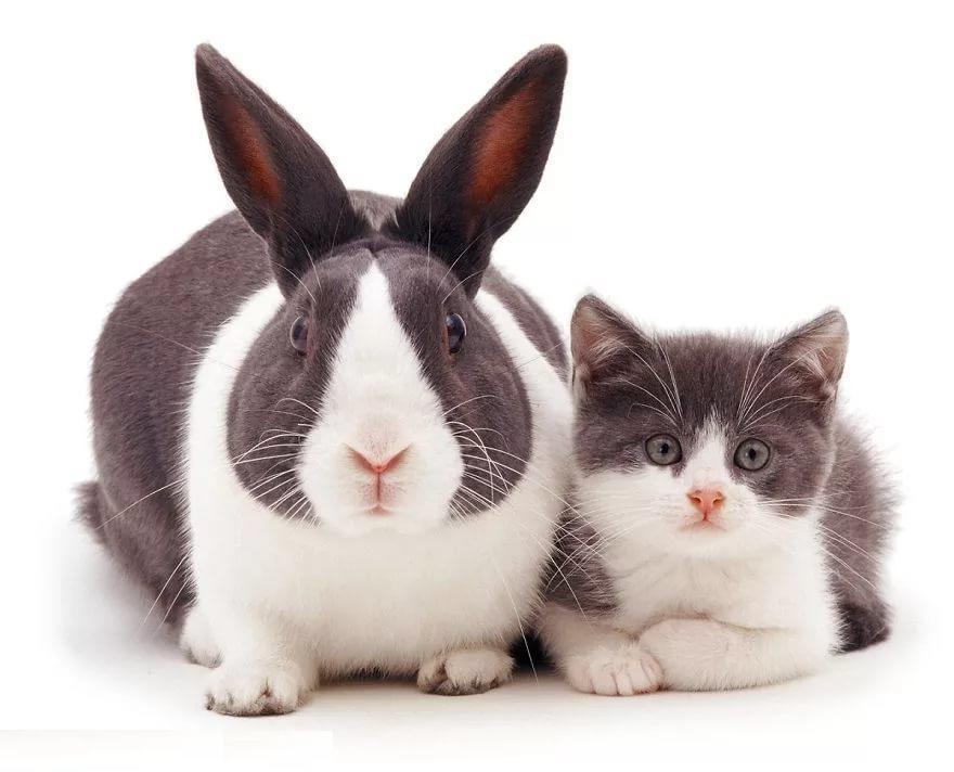 кролики и кошки
