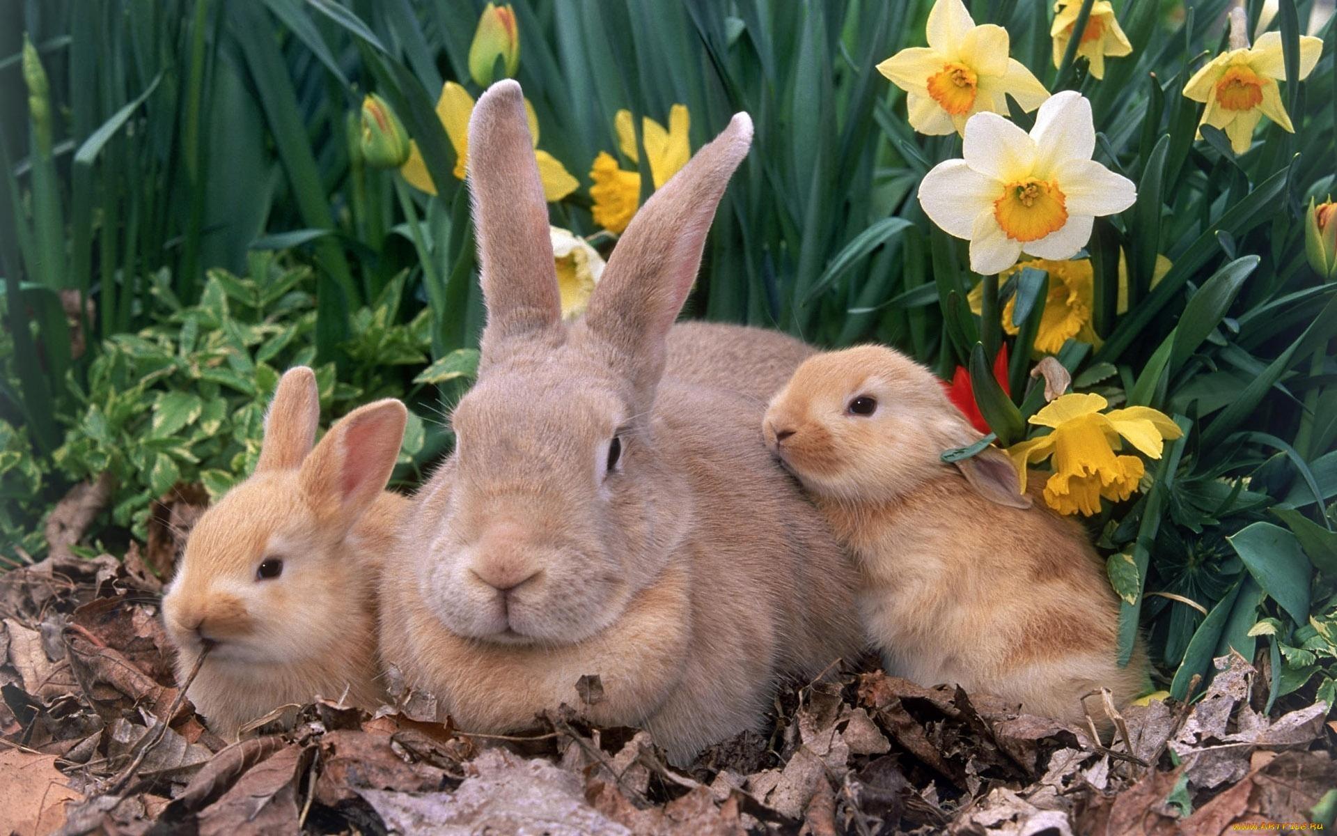 Может ли декоративный кролик жить на улице ?