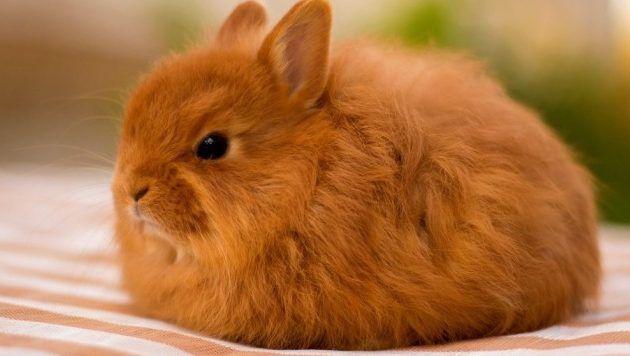Опыт содержания кроликов
