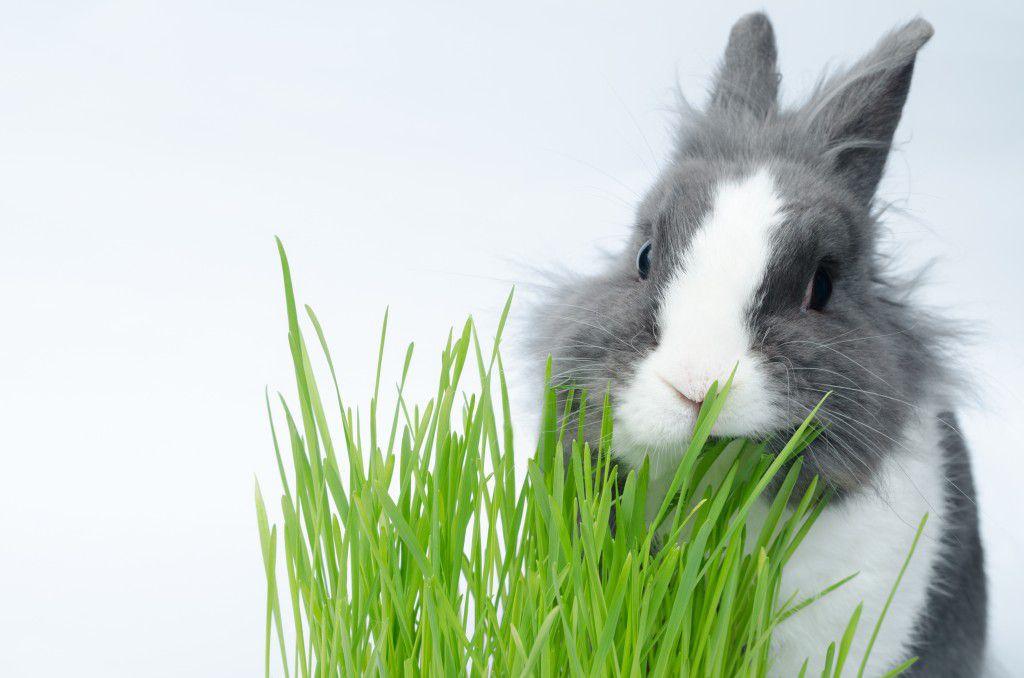 Отравления у кроликов