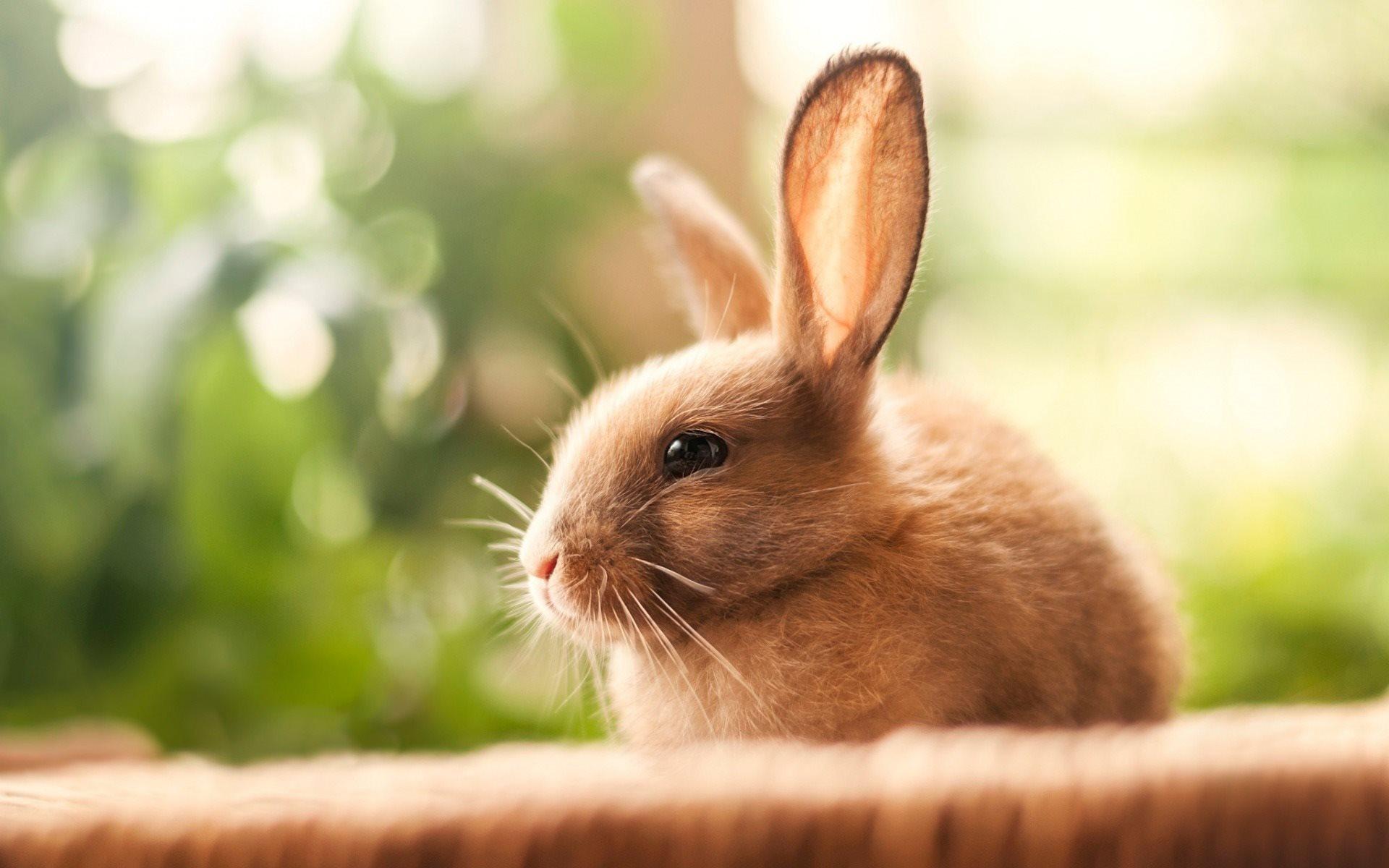 Разведение кроликов в вольере