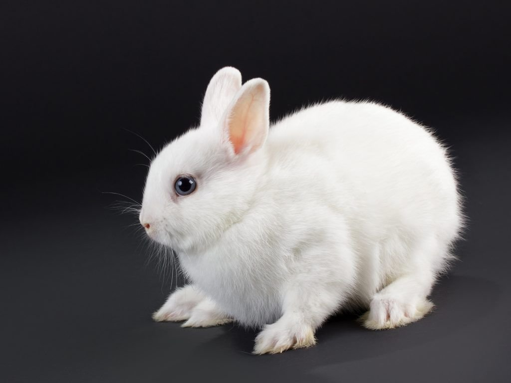 Содержание кроликов в квартире