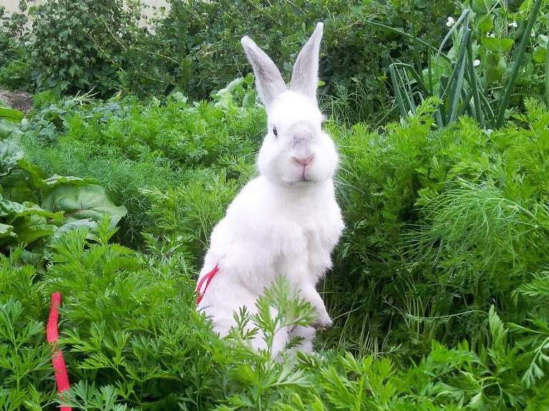 Содержание кроликов в частном доме